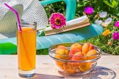 Relájese en el jardín floreciente en un día de verano soleado Imagenes de archivo