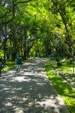 Relájese en el parque fotografía de archivo libre de regalías