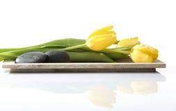 Relájese y harmonie con los tulipanes y las piedras Imagen de archivo