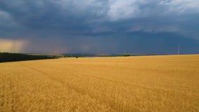 Relámpago y lluvia lejos en el horizonte del campo de trigo hermoso almacen de metraje de vídeo