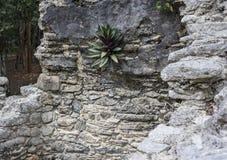 Relíquias de pedra antigas em ruínas maias de Coba, México da arquitetura Fotos de Stock Royalty Free