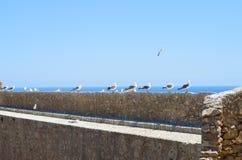 Relógio da gaivota Imagens de Stock