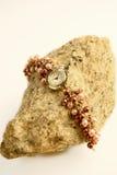 Relógio da rocha Fotos de Stock Royalty Free
