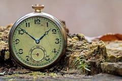Relógio de bolso retro do tesouro na floresta imagem de stock