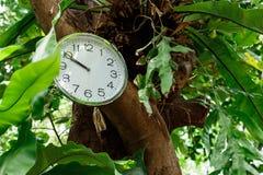 Relógio selvagem Fotografia de Stock