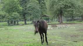 Relógios do cavalo in camera filme