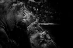 Relación emocional de la madre y del niño del hipopótamo con amor y cuidado imagen de archivo