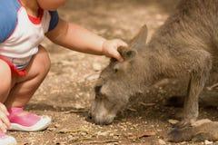 Relacionamento da criança do canguru e do ser humano Imagem de Stock