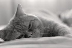 Relajación de la cama Fotos de archivo libres de regalías