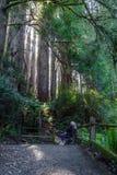 Relajación debajo de árboles gigantes Foto de archivo libre de regalías