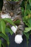 Relajación en el arbusto. Fotografía de archivo libre de regalías