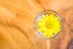 Relaje el fondo de la flor amarilla Imágenes de archivo libres de regalías