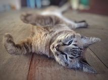 Relaje el gato Foto de archivo