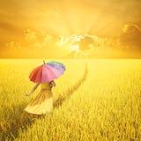 Relaje a la mujer que sostiene el paraguas multicolor en campo y puesta del sol amarillos del arroz Fotografía de archivo libre de regalías