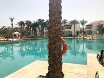 Relaje la piscina con agua azul clara con los sunbeds para tomar el sol con las sombrillas contra el contexto de un tronco de la  Foto de archivo