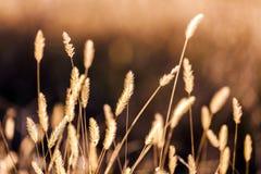 Relaksująca i pokojowa scena dziki pole zdjęcia royalty free