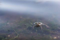 Relaksująca żaba Obrazy Royalty Free