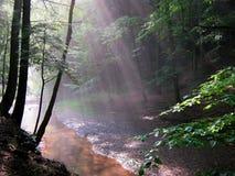Relaksująca Lasowa sceneria Fotografia Stock