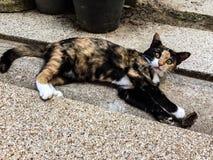 Relaksującego sweetie kota nieatutowy świt na przejściu Zdjęcia Stock