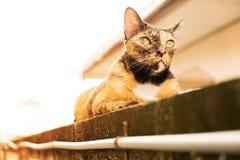 Relaksującego tabby dorosły kot kłaść w dół na ścianie kot jest śliczny i zdjęcie stock