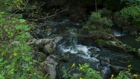 Relaksujący strumień śpieszy się nad skałami (2 6) zdjęcie wideo