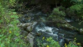 Relaksujący strumień śpieszy się nad skałami (1 6) zbiory wideo