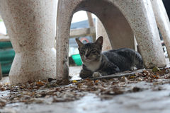 Relaksuje kota na ogródzie Zdjęcie Royalty Free