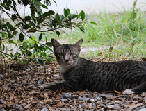 Relaksuje kota na ogródzie Zdjęcie Stock