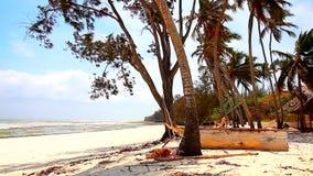 Relaksuje natury plażę zbiory wideo