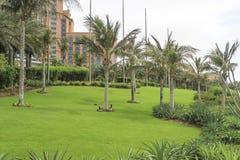 Relaksuje parka w zielonej trawie Obrazy Stock