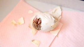 Relampagando el huevo del polluelo recién nacido que es llevado almacen de video