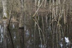 Árvore na água Imagens de Stock Royalty Free