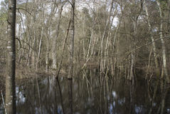 Árvore na água Fotos de Stock Royalty Free