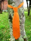 Relation étroite orange sur la nature Photo stock