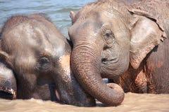 Relations d'éléphant Image stock