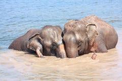 Relations d'éléphant Images libres de droits