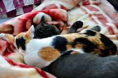 Relative Katze Stockbilder