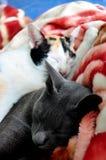 Relative Katze stockfotos