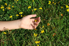 Relax. Ed hand on bed of grass and flowers Stock Photos