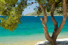 Relax on a beach. Pine tree on a beach with blue sea in the background Royalty Free Stock Image