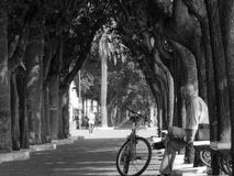 Relax during a bike walk. Some minutes of relax under the shadow in a hot summer day Stock Images