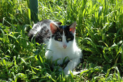 Relax Cat. Cat relaxing on the grass Stock Photo