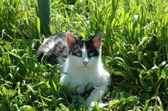 Relax Cat. Cat relaxing on the grass Royalty Free Stock Photos