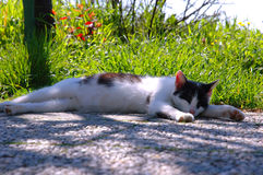 Relax Cat. Cat relaxing on the pathway Royalty Free Stock Image