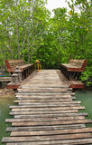 Relax at mangrove forest Stock Photo