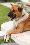 Relax dog Royalty Free Stock Images