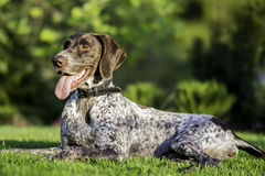 Relax. Dog waiting for some play Royalty Free Stock Images