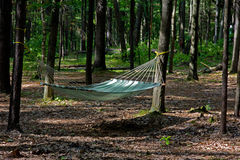 Relax in forest. Royalty Free Stock Photo