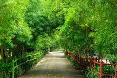 Relax and Freshness Walk Path under the Tree stock image