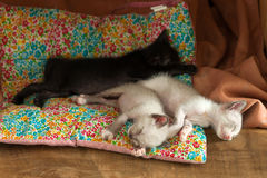 Relax group cute kitty cat sleeping Stock Image